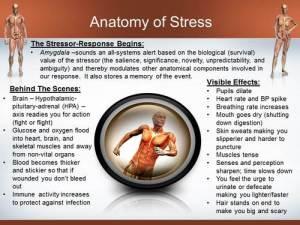 anatomy-of-stress